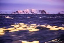 Paysage de l'Antarctique – Photo: Philippe Pernet