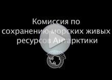 Видео об АНТКОМ – заголовок на экране