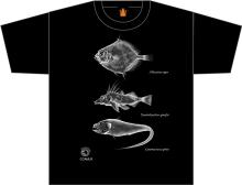 Дизайн футболки 2014 г., созданный Николасом Гаско